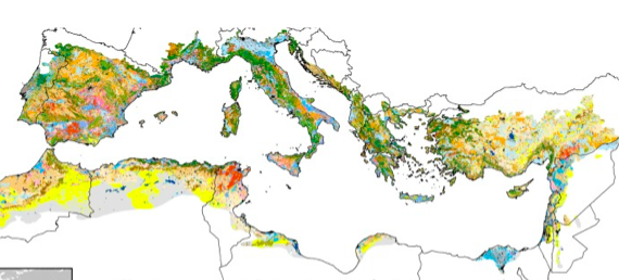 Read more about the article Global change effects on land management – Mediterranean (scientific paper)