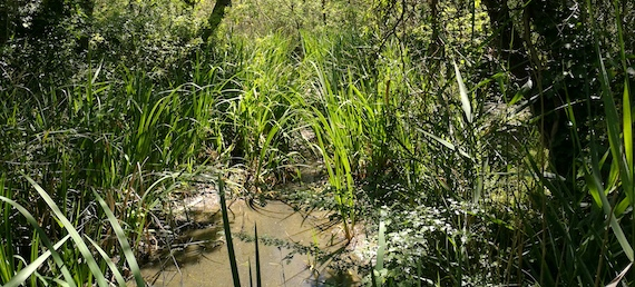 Read more about the article Mapping Mediterranean wetlands with remote sensing (scientific paper)
