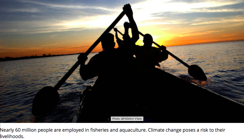 Climate change poised to transform marine and freshwater ecosystems (FAO)
