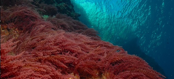 Read more about the article Climate change threatens marine protected areas (Nature Climate Change Letter)