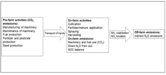Contribution of old wheat varieties to climate change mitigation (article)