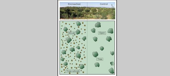 Mediterranean wood-pastures under climate change (article)
