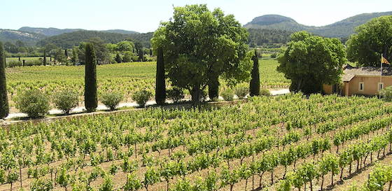 Vineyards in transition : grape producing regions under climate change (article)