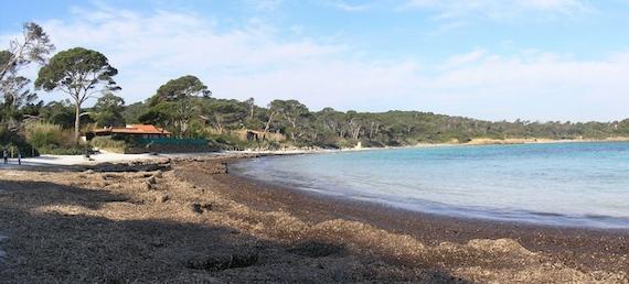 Salinization effects on coastal ecosystems (article)