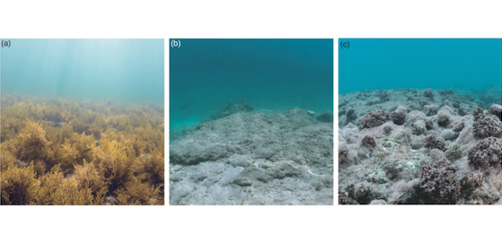 Tropicalization may invert trophic state and carbon budget of shallow temperate rocky reefs (article)