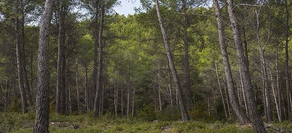 Read more about the article Ecosystem services provision by Mediterranean forests will be compromised above 2℃ warming (article)