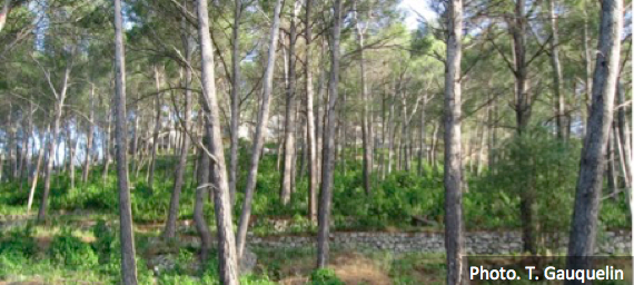 Mediterranean forests, land use and climate change: scientific paper