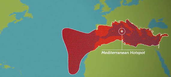 Mediterranean hotspot