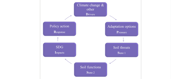 Impacts of climate change adaptation options on soil functions (scientific article)
