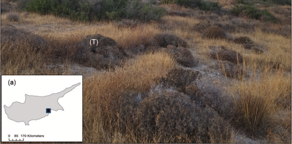 Read more about the article The possible role of Ziziphus lotus as an ecosystem engineer in semiarid landscapes (article)
